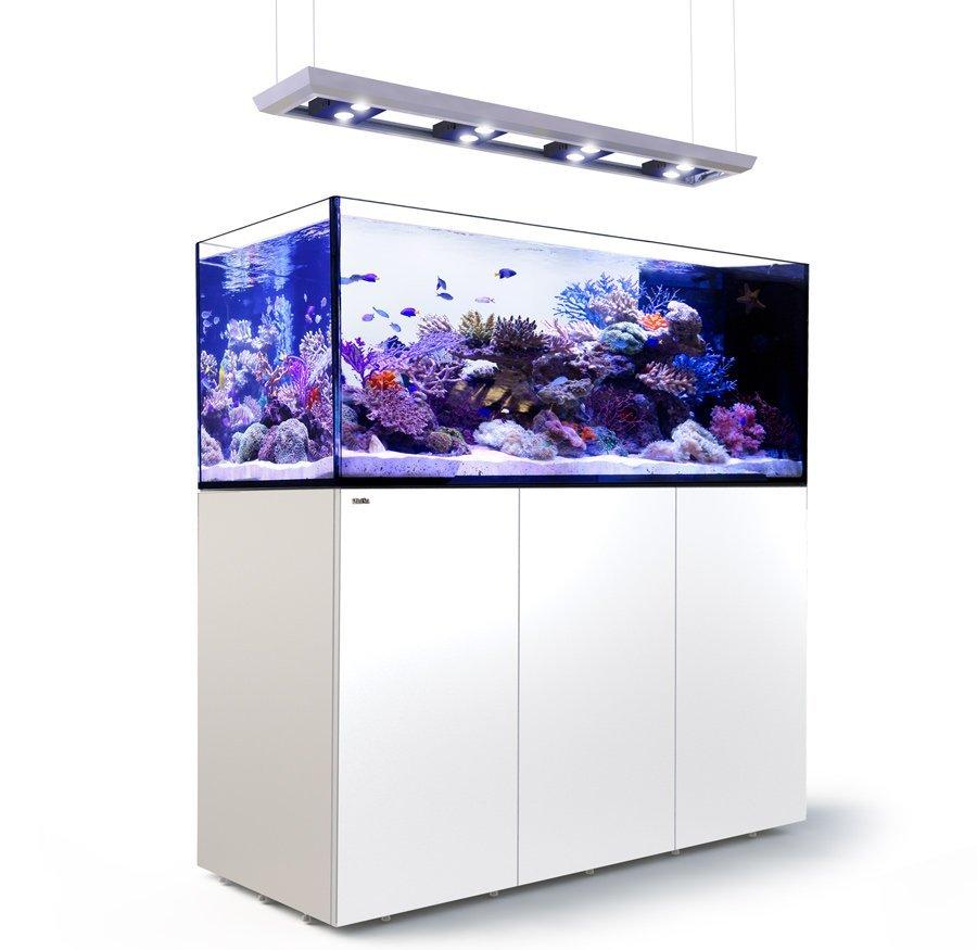 Sydney eastern suburbs aquarium removals redsea aquarium cade aquarium
